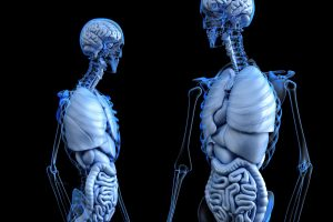 The Vagus Nerve and your body