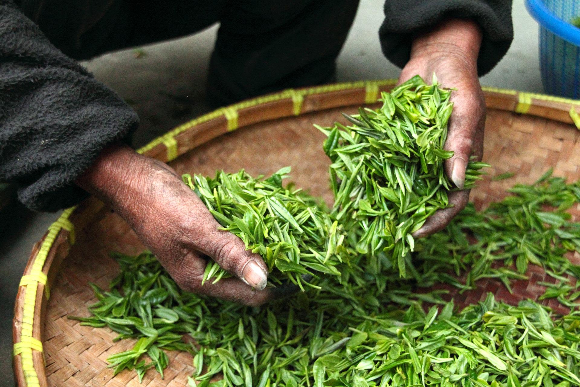 Green tea for men over 50